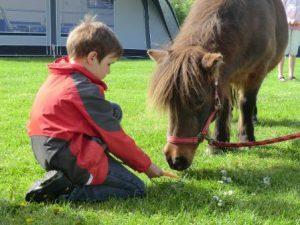 2014 pony's